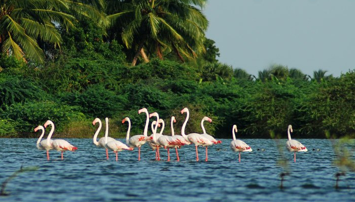 Salim Ali Bird Sanctuary Goa